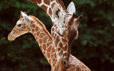 Patenschaft im Kölner Zoo